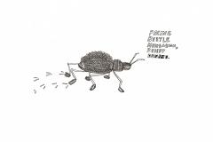 pacing-beetle_e