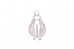 Magpies-moon9